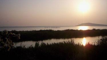 στις λιμνοθάλασσες του  Αμβρακικού