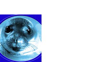 MOm-Εταιρεία για τη Μελέτη και Προστασία της Μεσογειακής Φώκιας