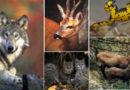 Άγρια Θηλαστικά της Στερεάς Ελλάδας
