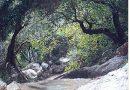 The flora around Neda river